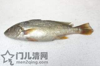 食材-黄花鱼(石持 イシモチ)