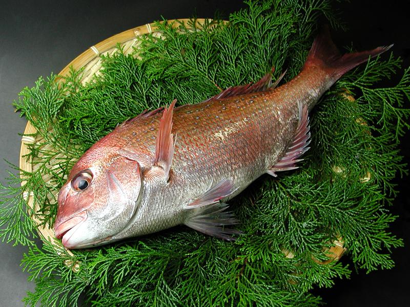 食材-真鲷鱼(真鯛 まだい)