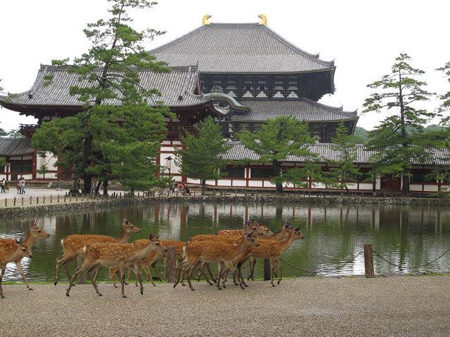 攻略:日本奈良县中文导航