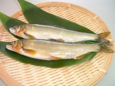 食材-香鱼(鮎 あゆ)