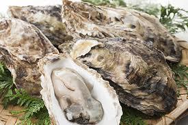 食材-生蚝(牡蠣 かき)