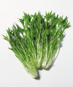 食材-水菜(みずな)